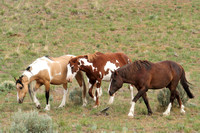 South Steens Wild Horses M138952