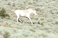 Fish Creek Wild Horses M131966