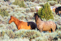 Fish Creek Wild Horses M132019