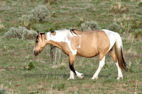 South Steens Wild Horses B138232