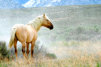 Fish Creek Wild Horses B130366