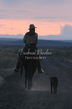 Cowboy in Sunset M6810